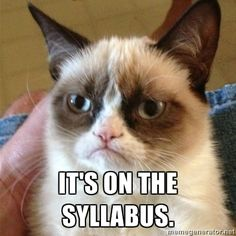 syllabus grumpy cat